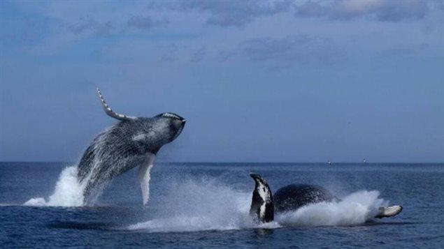 欢跃跳伐表那些动物图片